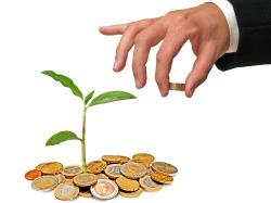 money_tree_sml